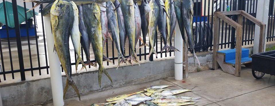 Mahi Fishing: Adventurous Custom Rods